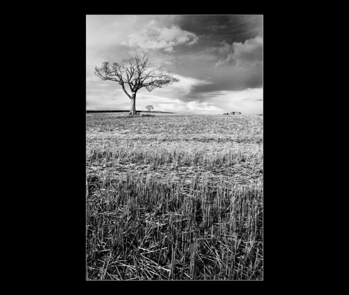 Lonely-Tree-at-Bangor-Northern-Ireland-Landscape-Photography
