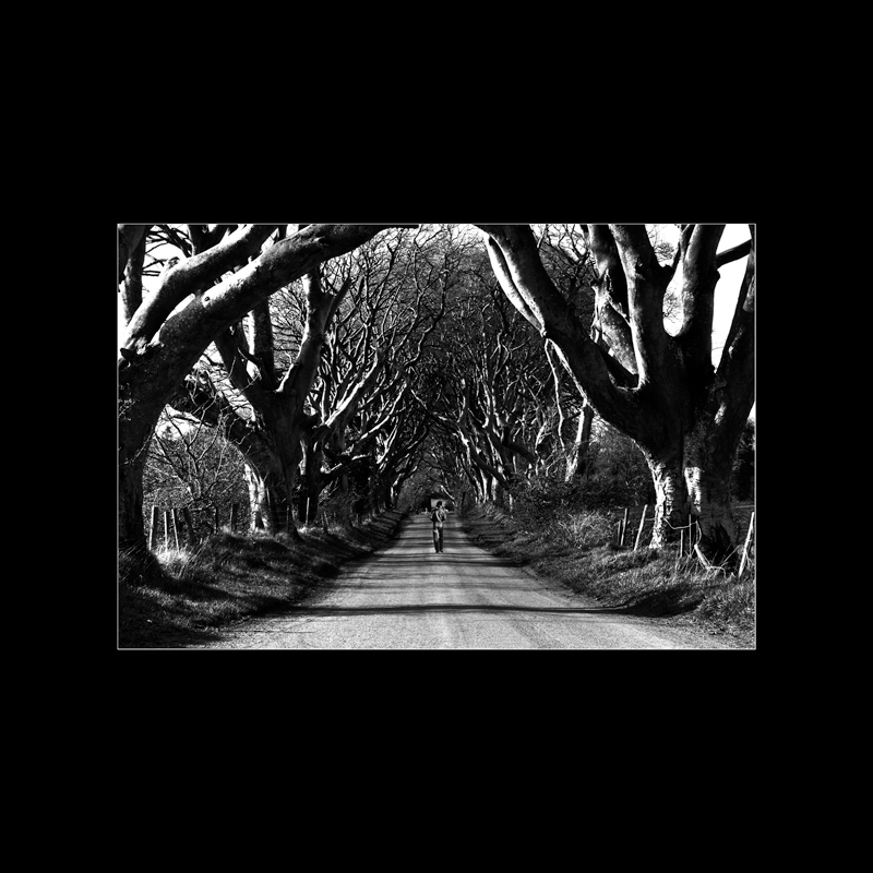 Stranocum-trees-in-Black-and-White-Northern-Ireland-Landscape-Photography